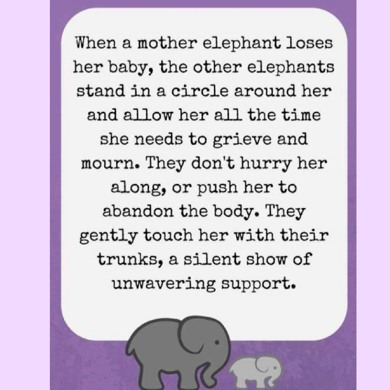 Elephants know by Grieving Parents Support Network